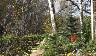 Фото Альпийская горка - Ландшафтный дизайн в Капитан Клаб, Заокский район, Симферопольское шоссе