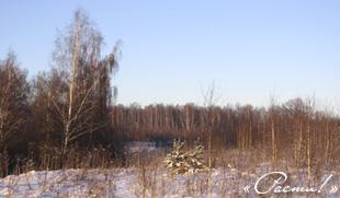 дизайн лесного участка, лесной стиль, фото