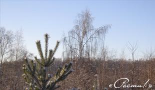 Капитан Ленд - Зима на Лесной очереди. Капитан Клаб, Заокский район, Симферопольское шоссе.