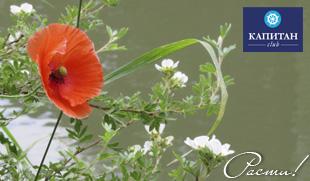 Фото ландшафтного дизайна участка - мавританский цветочный газон