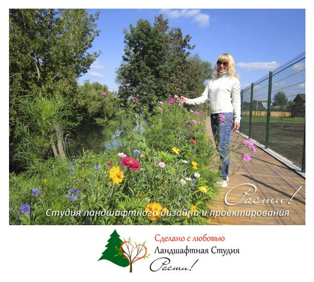 природный ландшафтный дизайн, декоративный газон, дизайн газона, заокский район