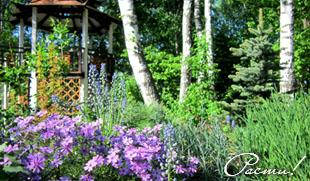 природный сад, лесной ландшафтный дизайн, пейзажный цветник, фото