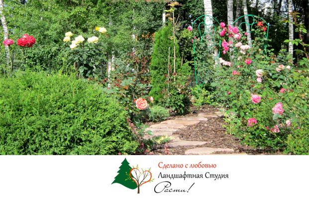 Природный дизайн, розарий, цветники, фото, услуги дизайнера