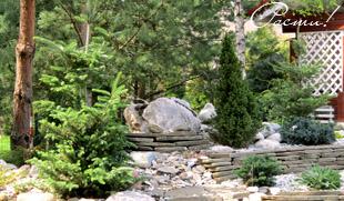 Альпийская горка, лесной дизайн, ландшафтные работы, заокский