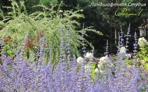 дизайн цветника, композиция с цветами, природный сад, лесной стиль, студия расти, услуги ландшафтного дизайнера, симферопольское шоссе, московская область