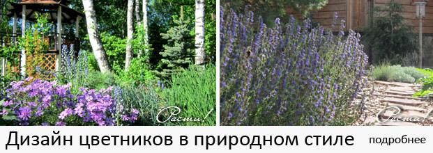 цветник, миксбордер, ландшафтная композиция перед домом, заказать дизайн цветника, услуги по дизайну композиции