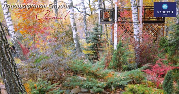 альпийская горка, альпийский ландшафтный дизайн, хвойные в дизайне, хвойный сад, фото, андрей заокский