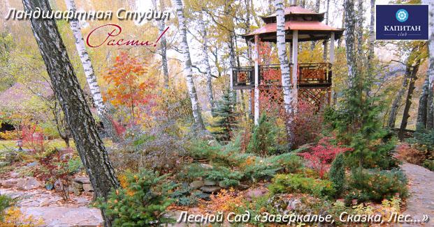 лес дизайн, лесной участок, хвойные, хвойный сад, альпийский ландшафтный дизайн, фото, заокский