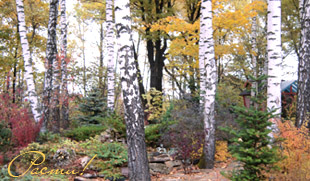 горка фото, альпийский ландшафтный дизайн, альпийская горка, лесной стиль сада, услуги дизайнера, заокский