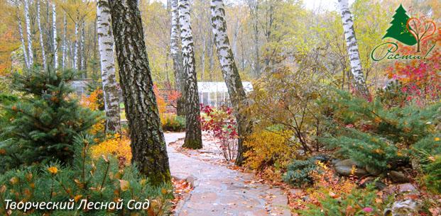 лесной дизайн, хвойный сад, альпийский дизайн, фото, услуги ландшафтного дизайнера, заокский