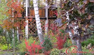 лесной дизайн участка, клены в дизайне сада, услуги ландшафтного дизайнера, фото, симферопольское шоссе