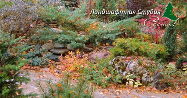 альпийский ландшафтный дизайн, горка, лесной стиль участка, фото, услуги ландшафтного дизайнера