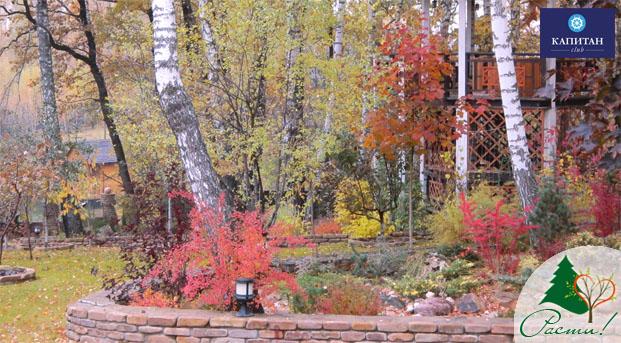 лесной ландшафтный дизайн, лесной стиль участка, природный сад, услуги ландшафтного дизайнера, заокский район